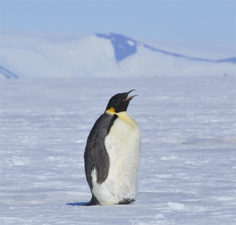 environmental protection in antarctica The secretariat supports the antarctic treaty consultative meetings and the committee for environmental protection, facilitates the exchange of information among the treaty parties, and maintains records of treaty and related meetings.